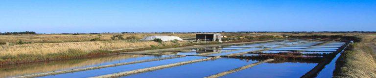 visite marais salants sur l'île de Ré